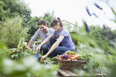 Smiling couple gardening in vegetable patch - RBF003208