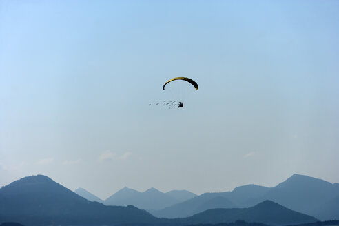 Austria, Salzburg State, flock of Waldrapps following paraglider - TCF004898