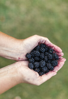 Woman's hands holding blackberries - MGOF000770