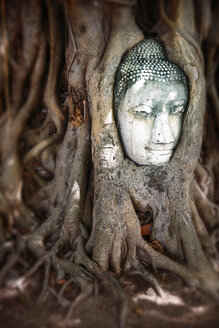 Thailand, Ayutthaya, head of sandstone Buddha between tree roots at Wat Mahathat - EHF000237