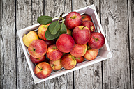 Box of red apples on wood - LVF003861