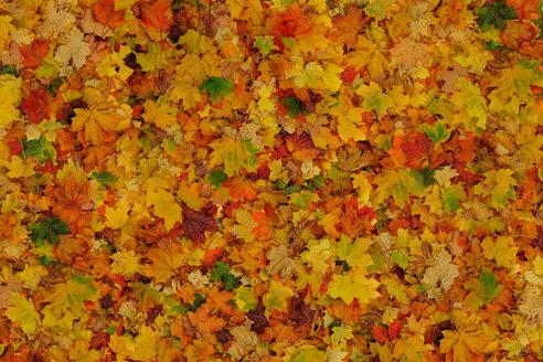 Autumn leaves - KLRF000103