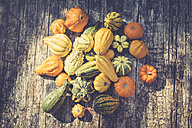 Decorative gourds on wood - ASCF000393