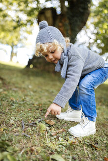 Little boy pointing on sweet chestnut lying on a meadow - MGOF000786