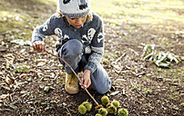 Boy with collected sweet chestnuts - MGOF000789