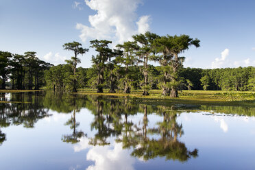 USA, Texas, Caddo Lake State Park - NNF000253