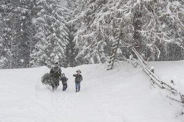 Austria, Altenmarkt-Zauchensee, father with two sons carrying Christmas tree in winter landscape - HHF005369