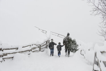 Austria, Altenmarkt-Zauchensee, father with two sons carrying Christmas tree in winter landscape - HHF005372