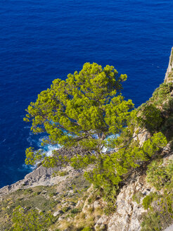 Spain, Mallorca, Cap de Fermentor, View down from Mirador d'es Colomer - AMF004296