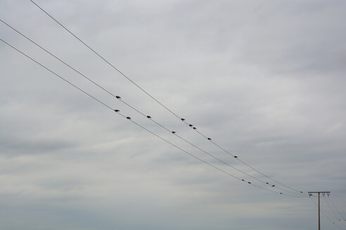 Flock of pigeons sitting at transmission lines in front of clouded sky - AXF000776