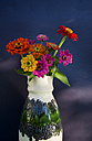 Flower vase with common zinnia in front of dark blue wall - GISF000174