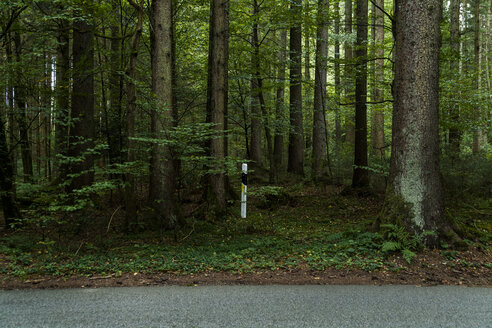 Germany, Bavaria, Useless marker post in the woods by country road - TC004907