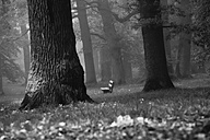 Forest in november, bench - JTF000701