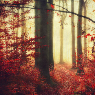 Autumn forest - DWIF000620