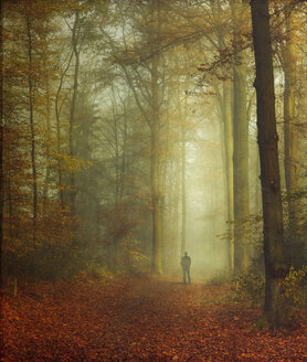 Walker in autumnal forest - DWI000626