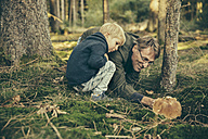 Mature man collecting bay bolete mushrooms with little boy - MFF002405
