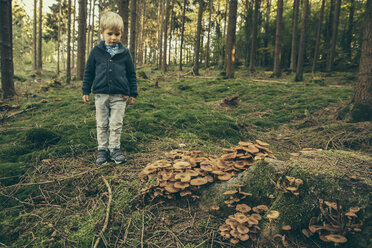 Little boy standing in forest, looking at honey fungi - MFF002423