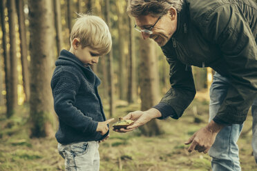 Mature man collecting bay bolete mushrooms with little boy - MFF002432