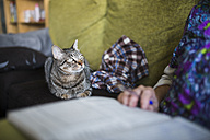 Tabby cat lying on the couch looking to its owner - RAEF000564