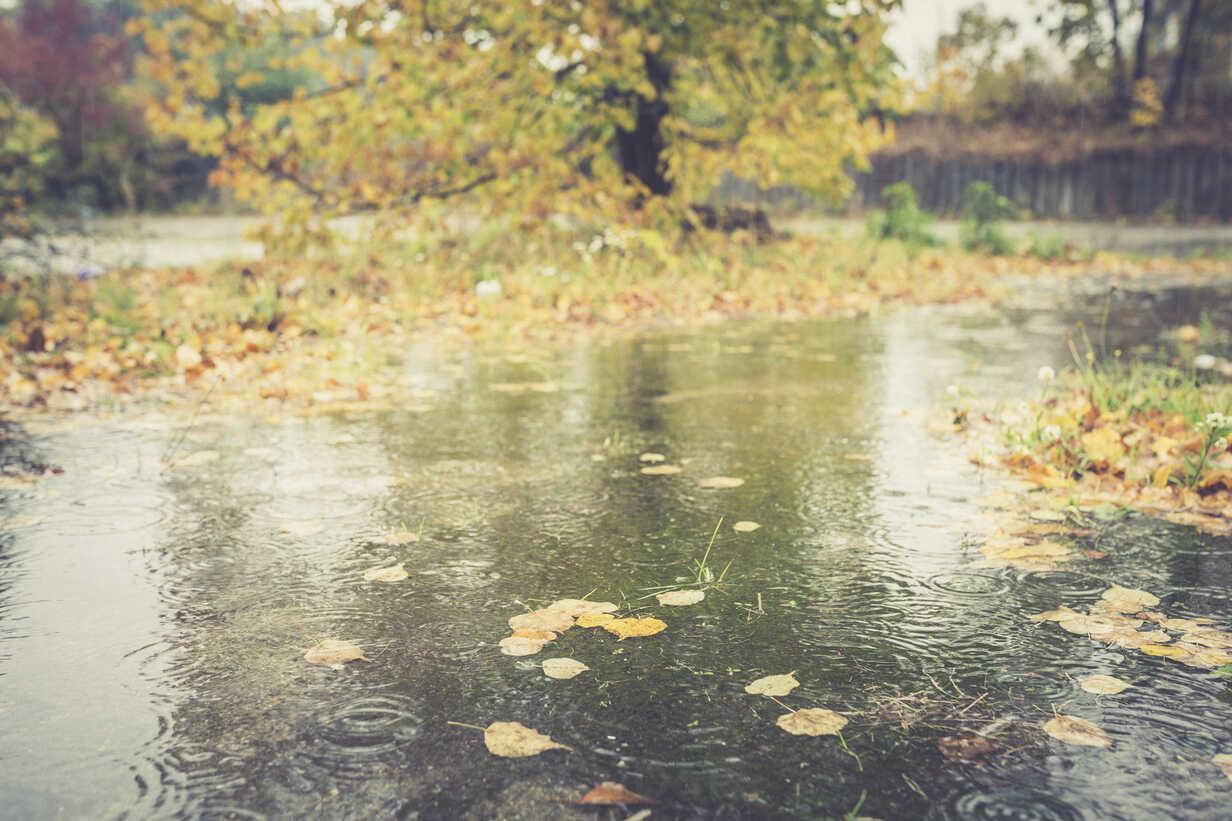 Rainy day in autumn - ASCF000401 - Anke Scheibe/Westend61