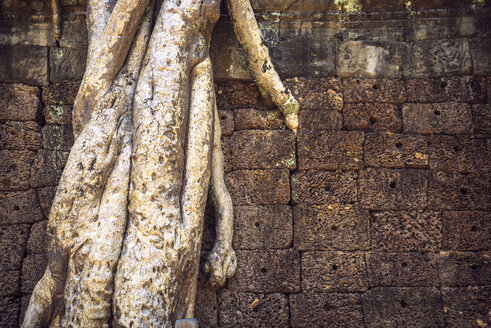 Cambodia, tree overgrowing wall in Angkor Thom Temple complex - EHF000284