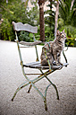 Spain, Mallorca, cat sitting on garden chair - RMAF000085