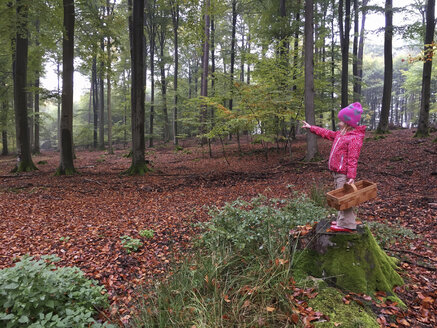 Young girl with mushroom basket in the woods, Waldenburger Berge, Germany - ALF000609