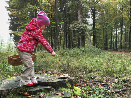 Young girl with mushroom basket in the woods, Waldenburger Berge, Germany - ALF000612