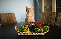 Portrait of tabby cat sitting behind basket with plastic flowers on a table - RAEF000584
