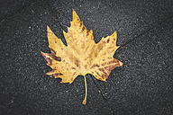 Autumn leaf - DEGF000572
