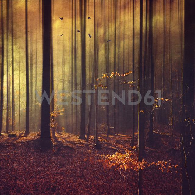 Germany, Remscheid, abstract forest scenery - DWIF000630 - Dirk Wüstenhagen/Westend61