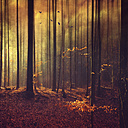 Germany, Remscheid, abstract forest scenery - DWIF000630