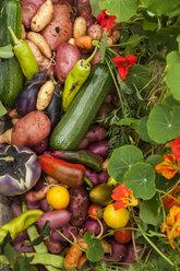 Different organic vegetables - TCF004916