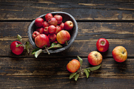 Bowl of different sorts of red apples on dark wood - CSF026578
