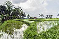 Indonesia, Bali, Wongaya Gede, Rice fields - WEF000398
