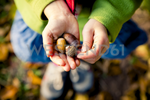 Little girl's hands holding acorns, close-up - LVF004114 - Larissa Veronesi/Westend61