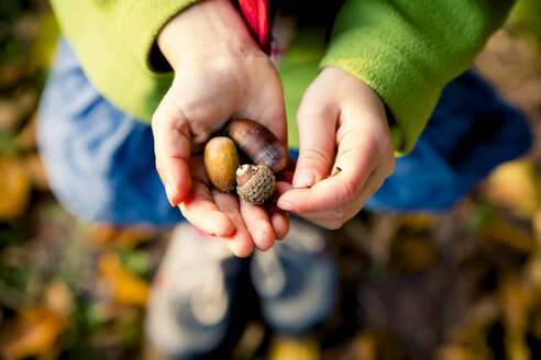 Little girl's hands holding acorns, close-up - LVF004114