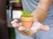 Man's hand holding flowerpot with growing young grass - KNTF000156