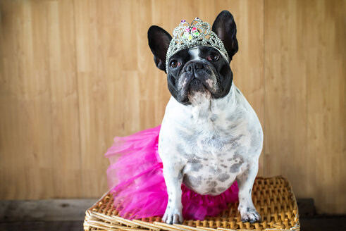 Portrait of French Bulldog dressed up as princess - KIJF000020