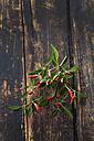 Twig of Chili Pequin on dark wood - CSF026698