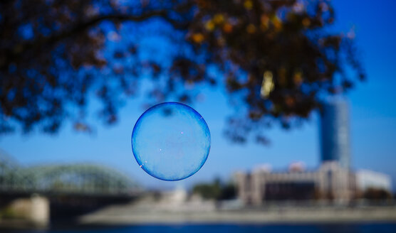 Soap bubble on tree, Rhine riverbank in the background - DASF000031