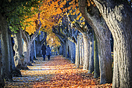 Germany, Bamberg, view to autumnal avenue - VT000472