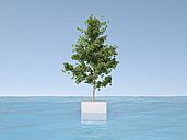 3D Rendering, tree on base in water - UWF000670