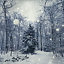 Snowy winter landscape, snow fall - DWI000647