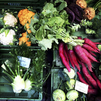 Assortment of vegetables - LVF004154