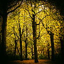 Autumn forest - KRPF001629
