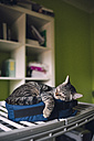 Tabby cat sleeping on a little bag at home - RAEF000663