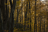 Spain, Catalonia, Forest in autumn, Vallfogona de ripolle - SKCF000025