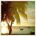 Mauritius, palm beach - JUNF000452
