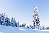 Germany, Bavaria, Bohemian Forest in winter - FOF008359